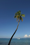 Coconut palm tree & yacht<br />