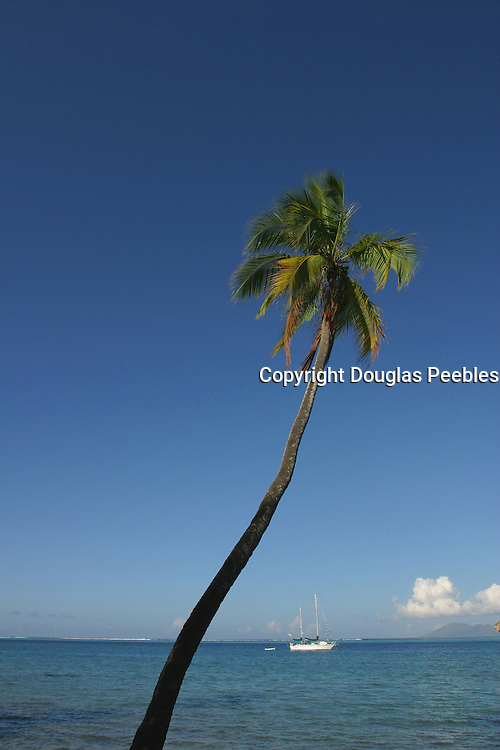 Coconut palm tree &amp; yacht<br />