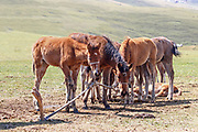 Yurts and Horses on Lake Song Kul in Kyrgyzstan