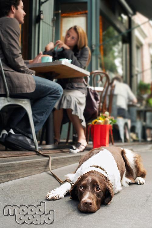 Dog lying on sidewalk outside cafe