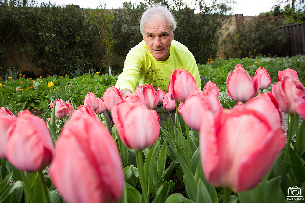 The Bulb Guy Rich Santoro maintains his 10,000 Spring bulb garden at his home in Berryessa, San Jose, California, on March 17, 2014. (Stan Olszewski/SOSKIphoto)