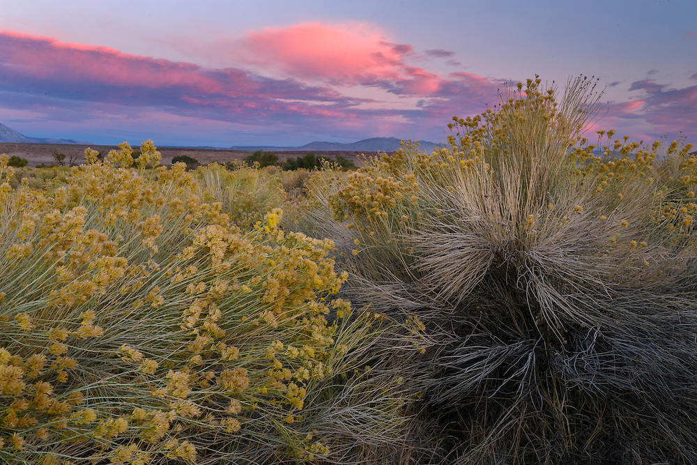 USA, California, Eastern Sierra,SHigh Desert near Bishop