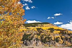 Camp Hale, CO:  Aspens just beginning to turn color in late summer along US 24, part of Colorado's Top of the Rockies Scenic Byway. Color is site-accurate; has not been saturated in Photoshop.