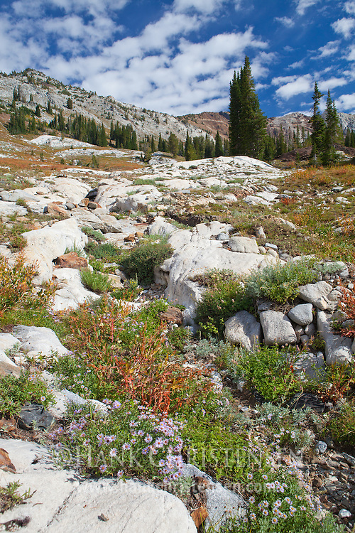 Wildflowers grow along a dry creekbed in the Imnaha Valley, Eagle Cap Wilderness, Oregon