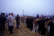 Germany, Lower Saxony, Leer, livestock market, the livestock market in Leer is the oldest and biggest in Europe.....Deutschland, Niedersachsen, Leer, der Viehmarkt von Leer ist der groesste und aelteste in Europa.....