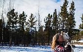 Yukon Sled Dogs