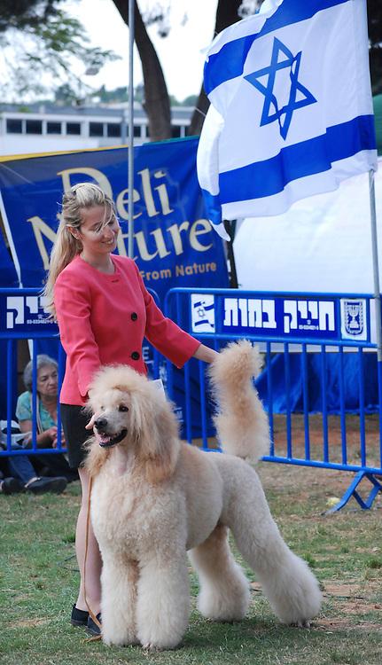 Israel, Tel Aviv, The International Dog Show 2010 Peach Standard Poodle