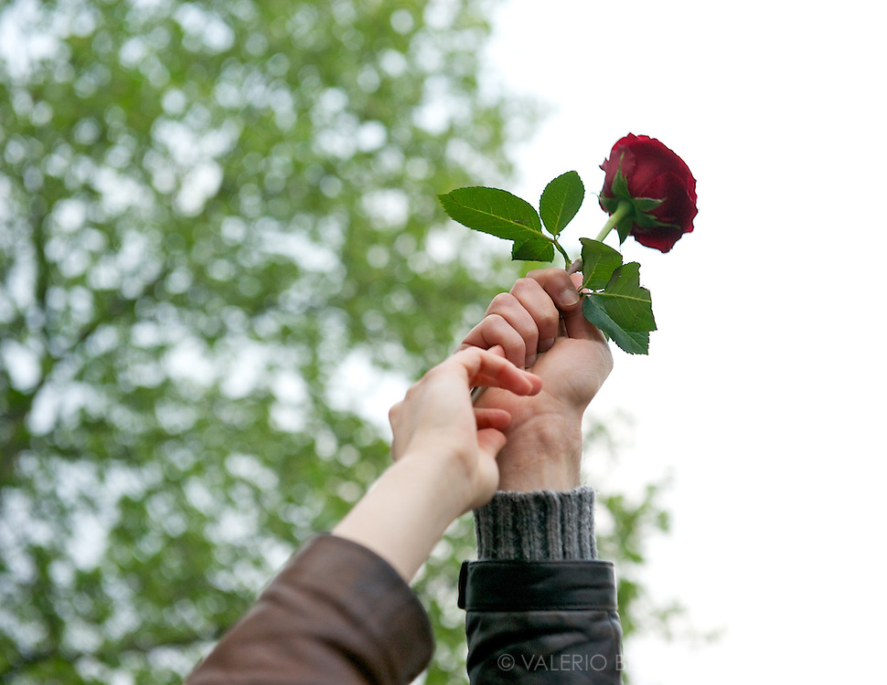 A red rose is risen. Red rose is the symbol of the French Socialist Party (PS).