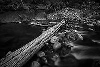 Merced River Meditation. Image taken with a Nikon D3 camera and 24-70 mm f/2.8 lens (ISO 200, 24 mm, f/16, 3 sec). Camera mounted on a tripod. Monochrome Version.