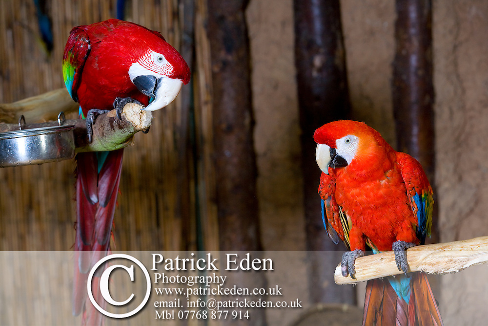 Parrots, Birds, Derek Curtis, Owner, Amazon World, Arreton, Isle of Wight, England, UK Photographs of the Isle of Wight by photographer Patrick Eden photography photograph canvas canvases