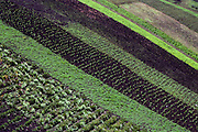 Patchwork of cultivated fields in the province of Chimborazo, Ecuador