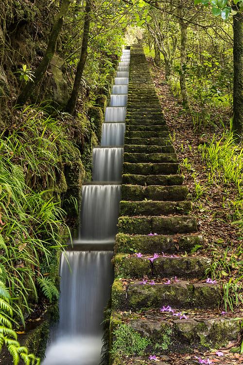 Levada, Madeira, Portugal