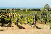 ITALY, Bolgheri (LI)<br /> 