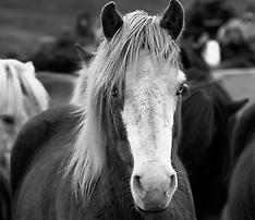 Horse corral Laufskalarett