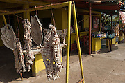 ILLEGAL salted Bushmeat for sale.  Caiman and Capybara (illegal) and Catfish (legal) from stalls on the main road in the Llanos. Near San Fernando de Apure, Guárico Province, VENEZUELA. South America.<br /> The Llanos are flood plains stretching north of the Orinoco River to the Andean foothills, covering 300,000sq km in Venezuela and another 220,000 sq km in Colombia. This area has poor soil but is rich in its river systems which floods in the wet season leaving shallow marshes which nourish a high concentration of birds and animals.