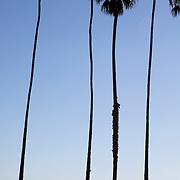 Boardwalk in Santa Barbara, CA.