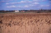 AE2CKC Marshland reedbeds on drained land at Hollesley Suffolk England