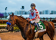 HALLANDALE BEACH, FL - JANUARY 27: Collected with Mike Smith return after the Pegasus World Cup Invitational at Gulfstream Park Race Track on January 27, 2018 in Hallandale Beach, Florida. (Photo by Alex Evers/Eclipse Sportswire/Getty Images)
