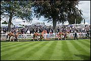 PADDOCK, Ebor Festival, York Races, 20 August 2014