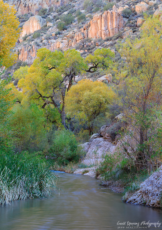 Autumn color arrives in Aravaipa.