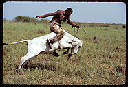 05: PANTANAL COWBOYS WORKING CATTLE