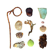 The mudflats behind the mangroves were full of intriguing and mysterious debris. Wrapped wire, abalone shell (Haliotis sp.), mudstone, Walai vine seed (Entada phaseoloides), coral branch, Calophyllum inophyllum drupe,  sea glass, Sally Lightfoot crab (Grapsus sp.), and driftwood.