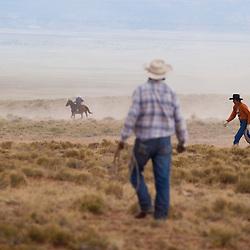 Wild Horse Roundup