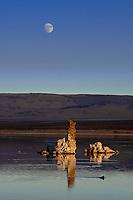 090-P101950<br /> <br /> Mono Lake Tufa State Reserve<br /> &copy; 2018, California State Parks.<br /> Photo by Brian Baer