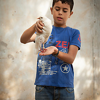 Pet dove, Burqin, West Bank.