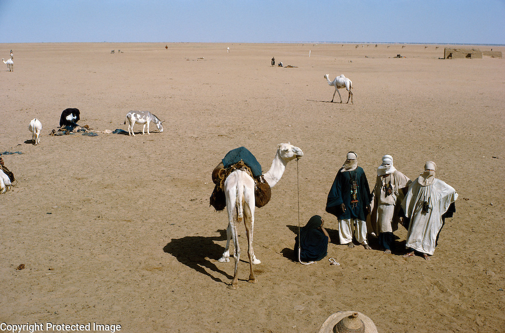 Tuareg (Touareg) men with camel in Sahara desert, In Abangarit, Niger Republic, Africa. The Tuareg speak a language belonging to the Berber branch of the Afroasiatic language family.