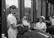 Santa Claus at Pelican House..1986..15.12.1986..12.15.1986..15th December 1986..Santa took time out from his busy and hectic schedule to donate blood at Pelican House Dublin. Christmas is a very busy time at Irelands' hospitals and a supply of blood is imperative. If Santa could make the effort why can't you, remember your donation could save a life..Image of Santa in good hands,as the nurses begin to take his donation.