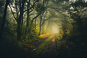 Dirt road in foggy dark forest
