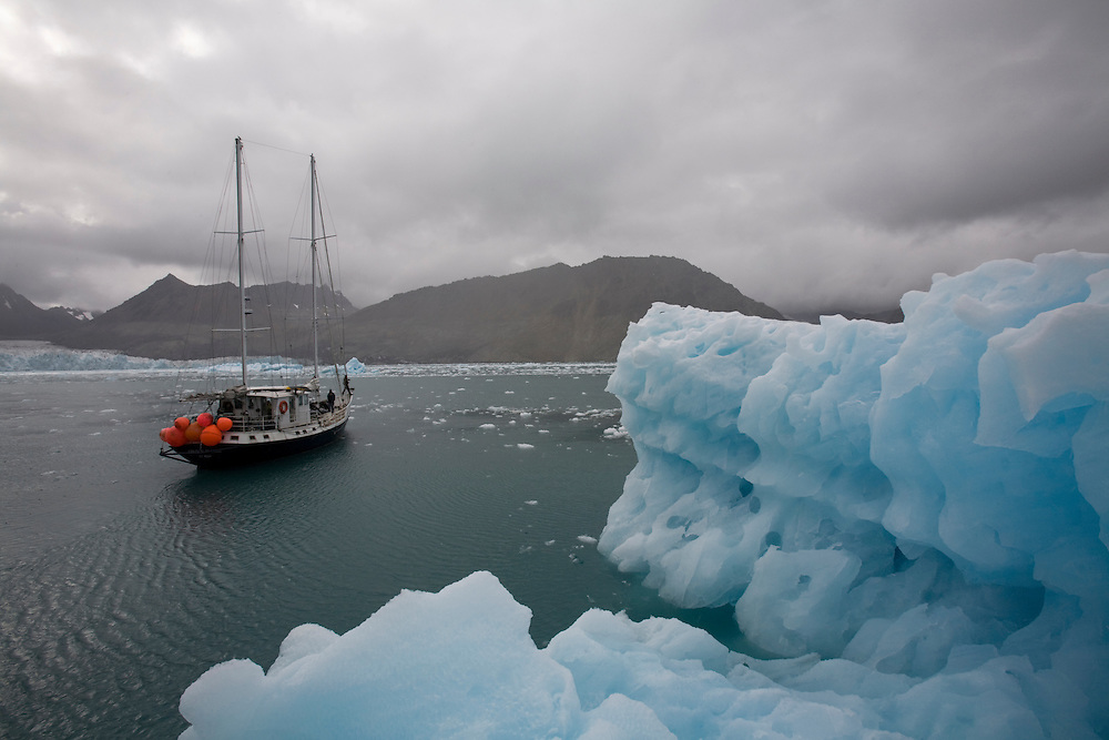 Antarctica, South Georgia Island (UK), The motor yacht S/V Golden Fleece sails past blue icebergs floating in Cumberland West Bay near the tidewater face of Neumayer Glacier.