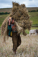 Farmer carrying sticky rice in Myanmar