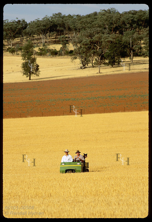 Farmer drives all-terrain vehicle amid golden fields of stubble & red fallow land; Coolamon, NSW Australia