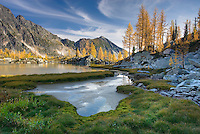 Alpine larches (Larix lyallii) and tarn in Monica Meadows, Purcell Mountains British Columbia
