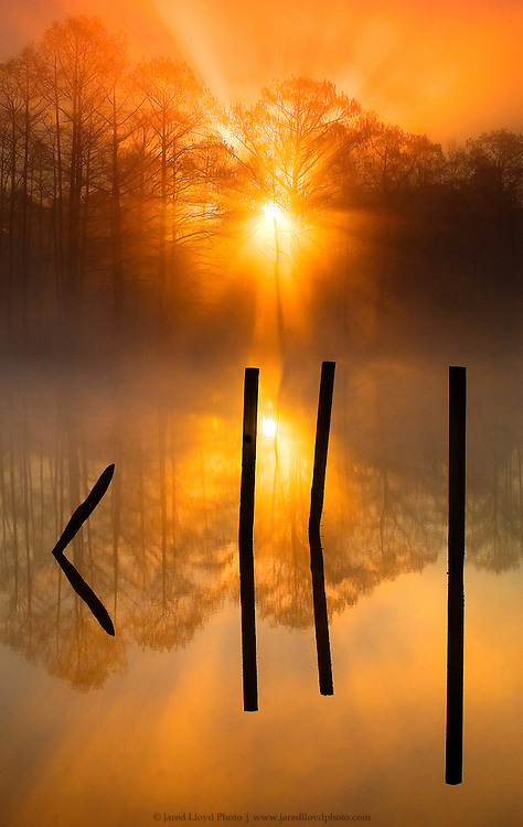 the sun bursts through the fog and trees as its begins to rise over a creek in eastern North Carolina