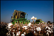 Cotton harvesters on a cotton field.