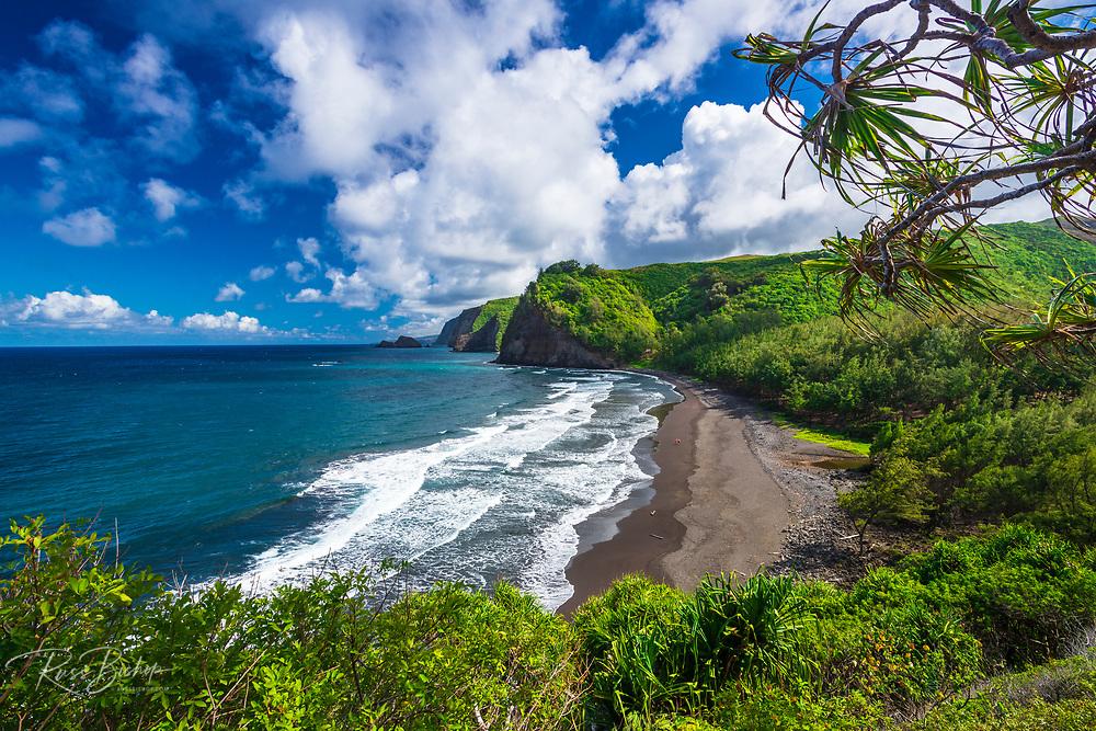 Pololu Valley and beach through hala trees (couple walking on beach), North Kohala, The Big Island, Hawaii USA