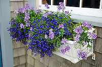 White window box with blue and purple flowers on a grey shingled seaside cottage.