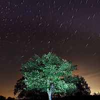 Lone tree in the New Forest at Godshill Enclosure. Photographed using long exposure and lightpainting.