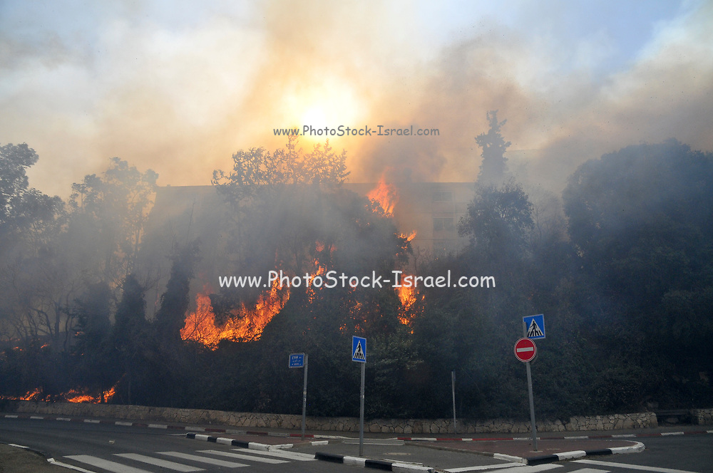 Trees burn in the Wild fire in the city of Haifa, Israel in November 2016
