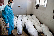 The remains of members of the Samouni family who were killed during Israel's Operation Cast Lead in the morgue of Al Shifa Hospital in Gaza City.