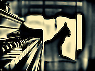 Singapura Cat in Window by Piano