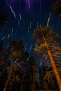 Star trails and evergreens, Bryce Canyon National Park, Utah