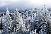 Washington, Chewelah Mountain. Frost covered trees of the Colville National Forest in winter. . PLEASE CONTACT US FOR DIGITAL DOWNLOAD AND PRICING.