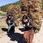 NEPAL FARMERS