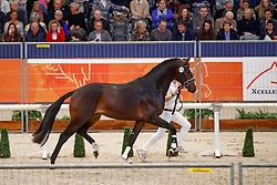 376, Kevin<br /> KWPN Stallionshow - 's Hertogenbosch 2018<br /> © Hippo Foto - Dirk Caremans<br /> 02/02/2018