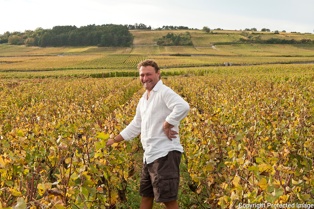 Harvest 2010, Burgundy, France
