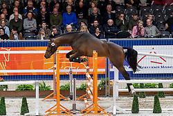 068, Mr Cornet<br /> KWPN hengstenkeuring - 's Hertogenbosch 2020<br /> © Hippo Foto - Dirk Caremans<br /> 29/01/2020